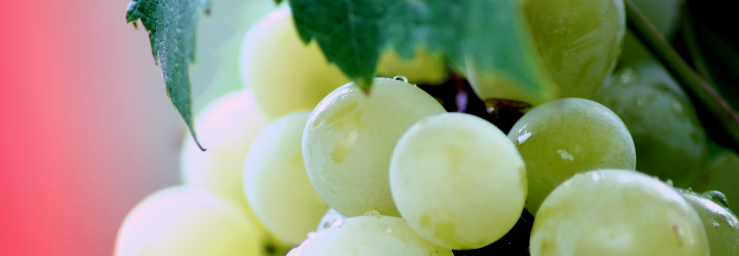 someone took a close-up of grapes, idk man.